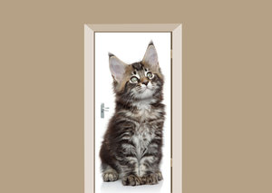 Deursticker kitten main coon