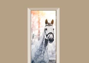 Deursticker paard schimmel