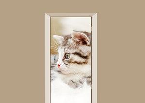 Deursticker kitten