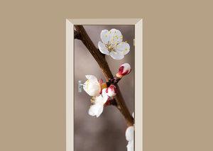 Deursticker abrikozenboom bloesem