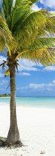 SALE: Deursticker palmboom 50x205cm (BxL)