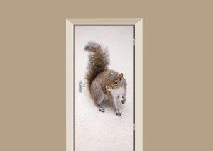 Deursticker eekhoorn