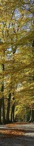 SALE: Muursticker/deursticker oude beukenbomen 42x230cm (BxL)